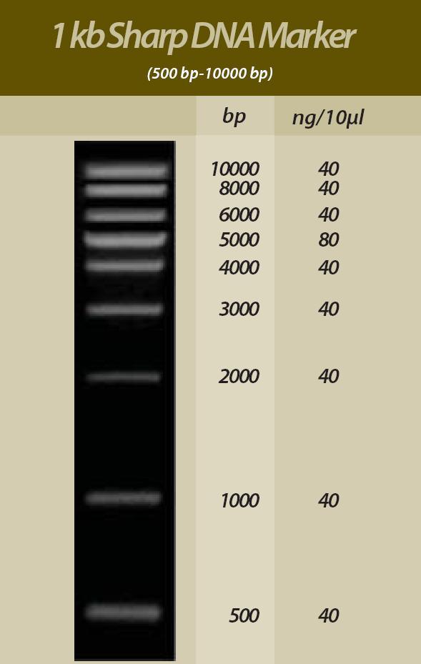 Kb sharp dna marker rd001 0 00 bioamerica biotech